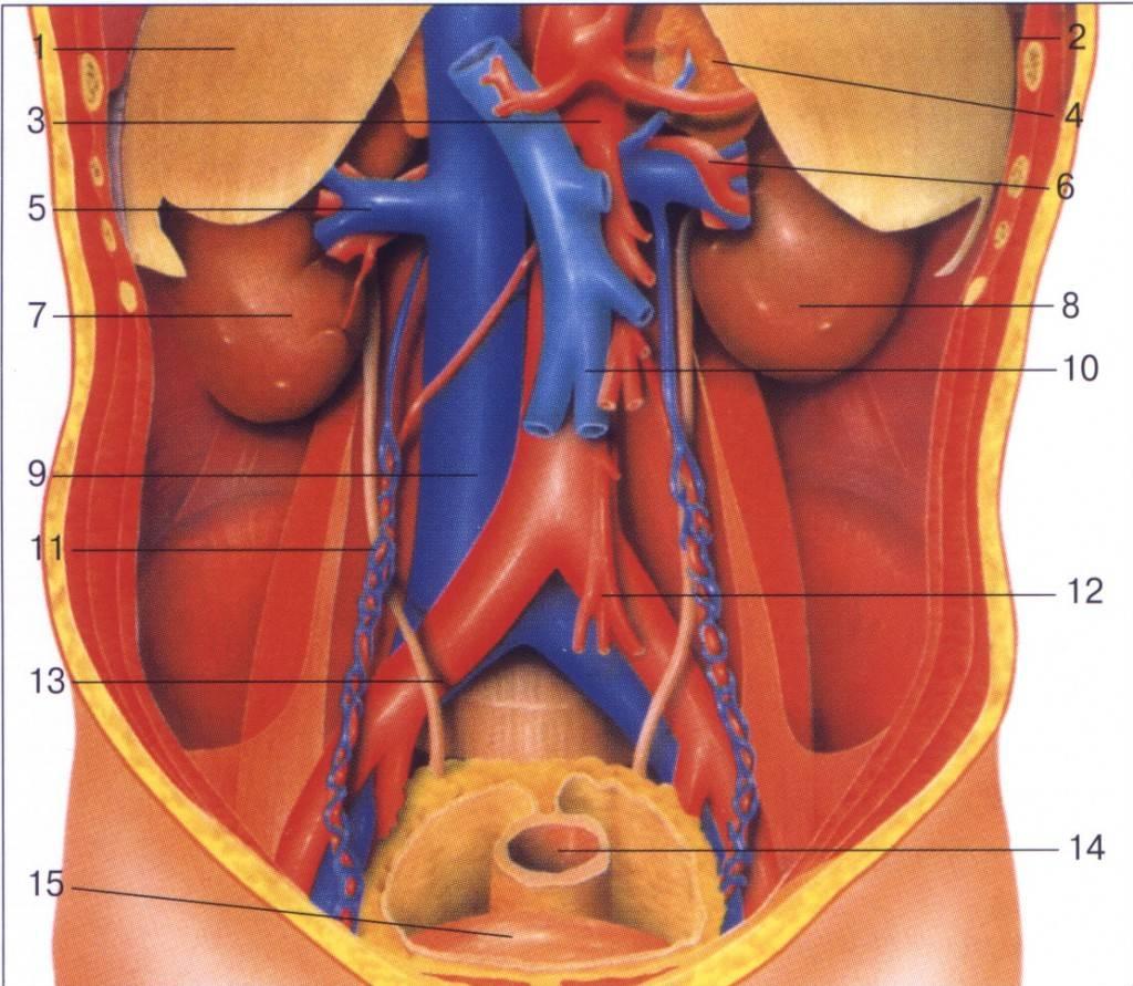 Фото — 6 Нарушения в деятельности внутренних органов — одна из причин прыщей на щеках