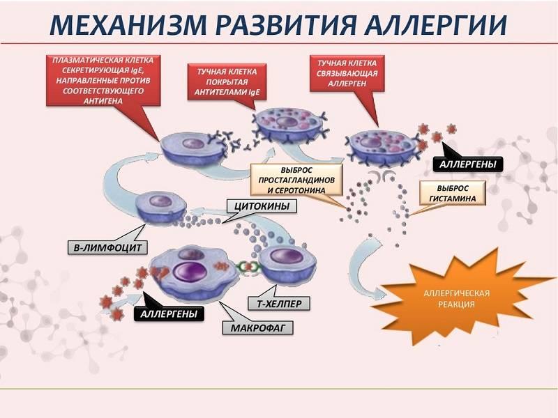 Развитие аллергии