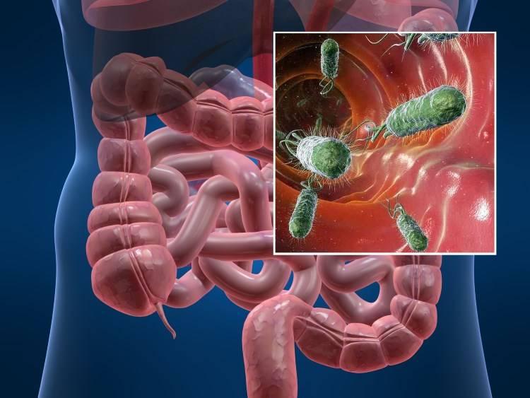 Болезни ЖКТ могут вызывать появление сыпи