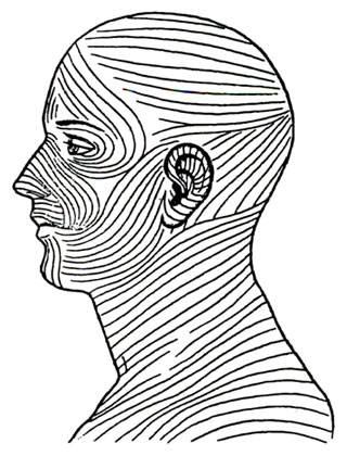 Линии лангера на лице схема