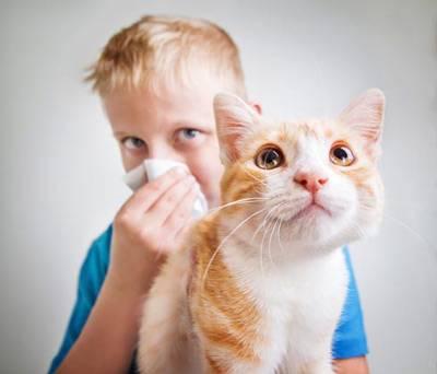 Аллергические реакции на кошек