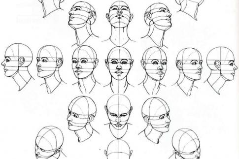 Схема лица